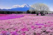 Đặt mua vé máy bay đi Nhật Bản ở TP.HCM Đặt mua vé máy bay đi Nhật Bản ở TP.HCM