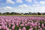 Đặt mua vé máy bay đi Hà Lan ở Hà Nội Đặt mua vé máy bay đi Hà Lan ở Hà Nội