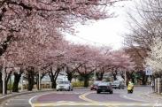 Bán vé máy bay đi Hàn Quốc ở quận 7 Đại lý bán vé máy bay đi Hàn Quốc tại quận 7